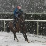 snowy-race