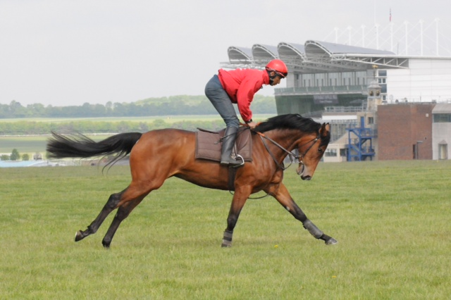 prebsale-exercise-at-newmarket