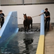 swimming-pool03