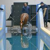 horse-swimming-pool03