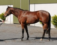 Lot 129, Tattersalls Guineas, May 2013