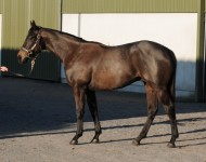 Lot 161, Tattersalls Guineas, May 2013