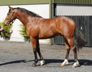 Lot 30, Arqana St Cloud, May 2013