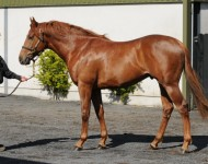 Lot 44, Arqana St Cloud, May 2013