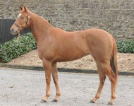ascot-lot13-dutchart