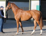 craven-lot104-sea-the-stars