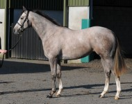 craven-lot114-exchange-rate