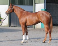 craven-lot130-exceed-excel