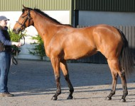 craven-lot47-kodiac