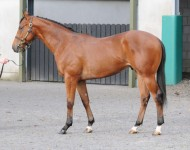 tg-lot180-Acclamation