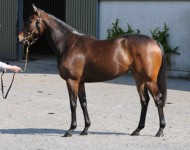 tg-lot200-Invincible-Spirit
