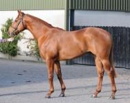 craven-lot58-elusive-quality-colt
