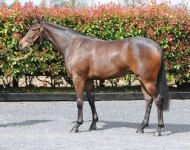 arqana-lot106-siyouni-filly
