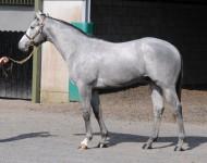 guineas-lot108-mizzenmast-colt