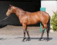 guineas-lot170-kyllachy-colt