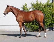 guineas-lot177-darkangel-filly