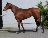 guineas-lot254-borntosea-filly